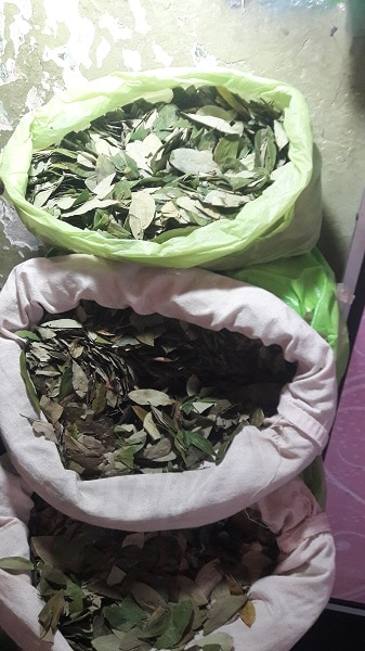 Chewing Coca Leaves in Peru - Independent Travel - World Citizen